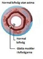 Astma9illu